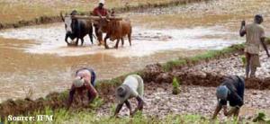 agri farm corps
